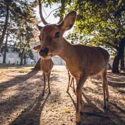 Japan – 1 Day in Nara